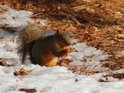 squirrel with seed